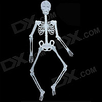 Halloween Glow-in-the-dark Plastic Skull Skeleton Decoration Props - White